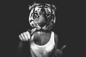 go-get-em-tiger